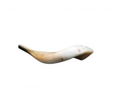 Shofar (chifre) de Carneiro semi polido