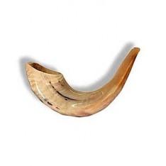 Shofar (chifre) de Carneiro polido