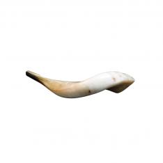 Shofar (chifre) de Carneiro semi polido D2